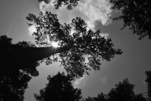 our-story-pine-tree-2-1024x682